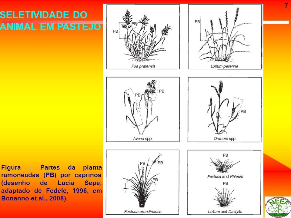 7 SELETIVIDADE DO ANIMAL EM PASTEJO Figura – Partes da planta ramoneadas (PB) por caprinos (desenho de Lucia Sepe, adaptado de Fedele, 1996, em Bonann