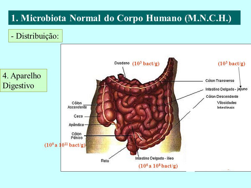 1. Microbiota Normal do Corpo Humano (M.N.C.H.) - Distribuição: 4. Aparelho Digestivo (10 3 bact/g) (10 9 a 10 11 bact/g) (10 3 bact/g) (10 6 a 10 8 b