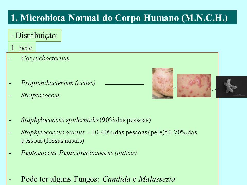 1. Microbiota Normal do Corpo Humano (M.N.C.H.) - Distribuição: 1. pele -Corynebacterium -Propionibacterium (acnes) -Streptococcus -Staphylococcus epi