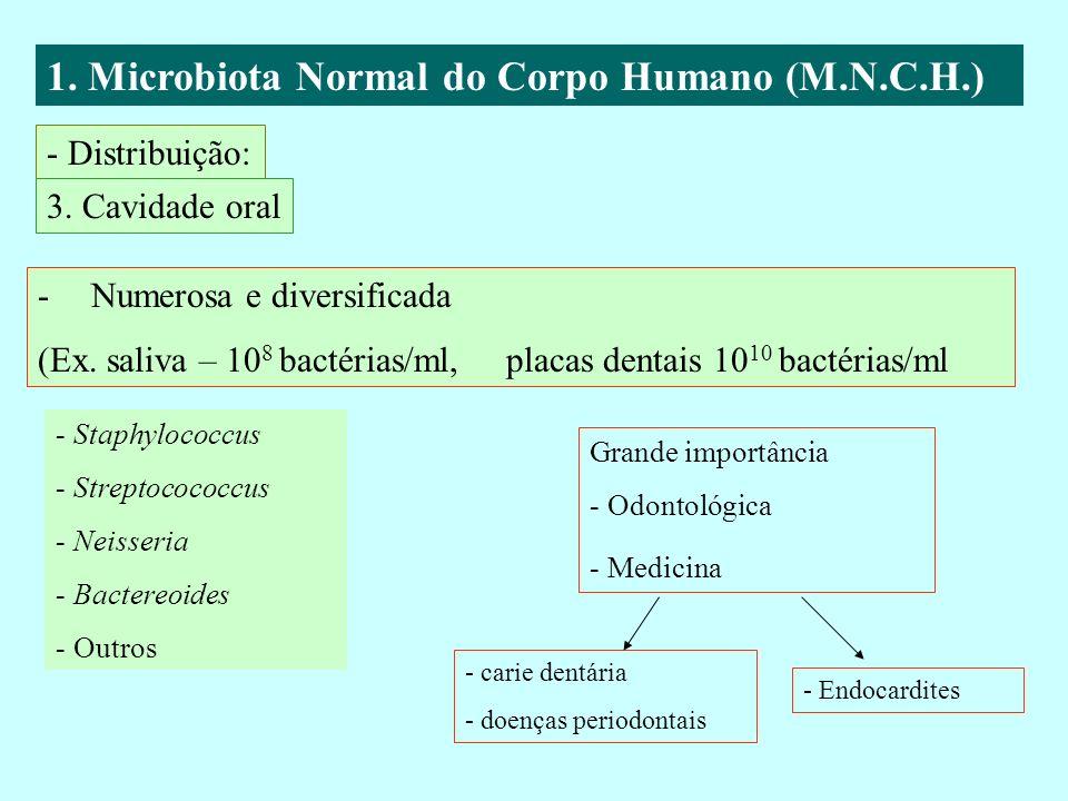 1. Microbiota Normal do Corpo Humano (M.N.C.H.) - Distribuição: 3. Cavidade oral -Numerosa e diversificada (Ex. saliva – 10 8 bactérias/ml, placas den