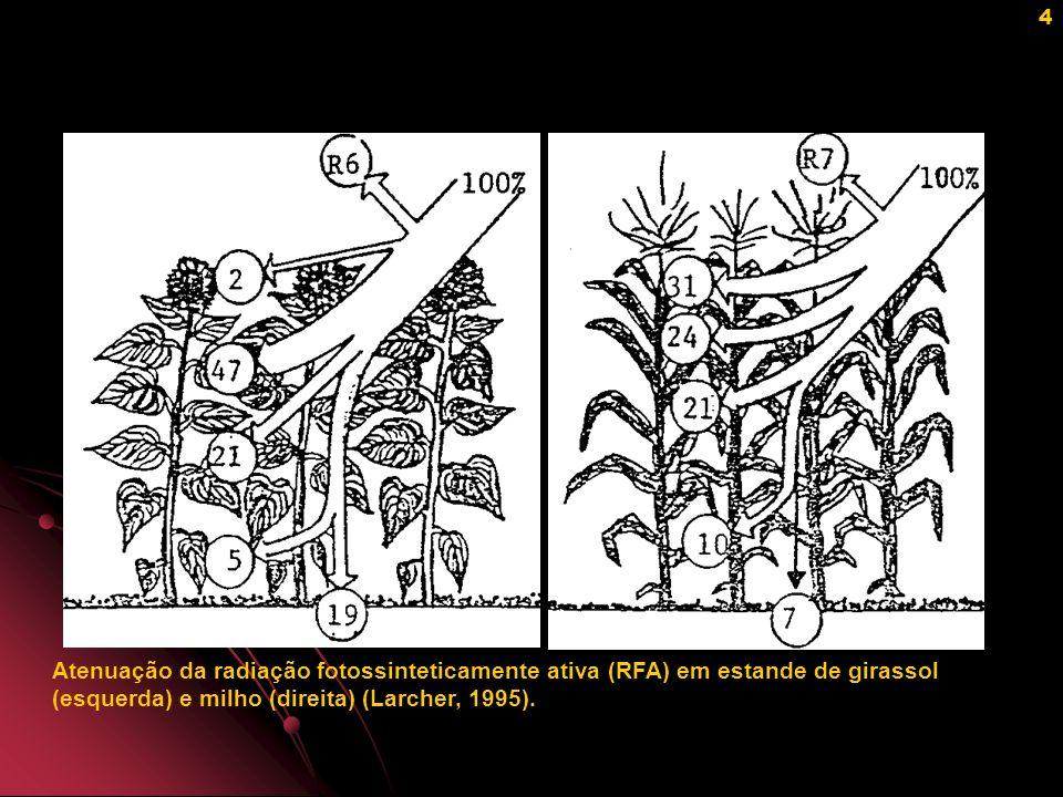 5 Ação do ângulo foliar sobre a distribuição de luz no perfil do dossel (Gillet,1984).