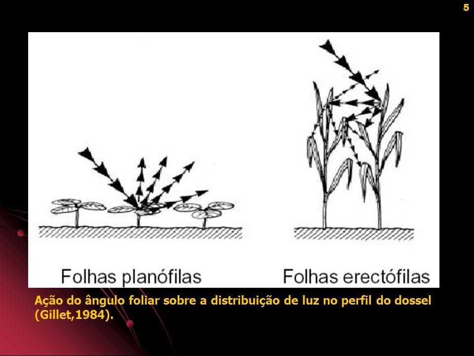36 IDADE DO PASTO X PERDAS DE FORRAGEM Perdas de forragem em pasto de capim Tanzânia após descanso de 37 dias (3,5 folhas/perfilho) (Silva, 2004).