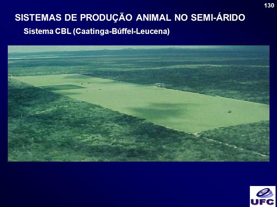 130 SISTEMAS DE PRODUÇÃO ANIMAL NO SEMI-ÁRIDO Sistema CBL (Caatinga-Búffel-Leucena)