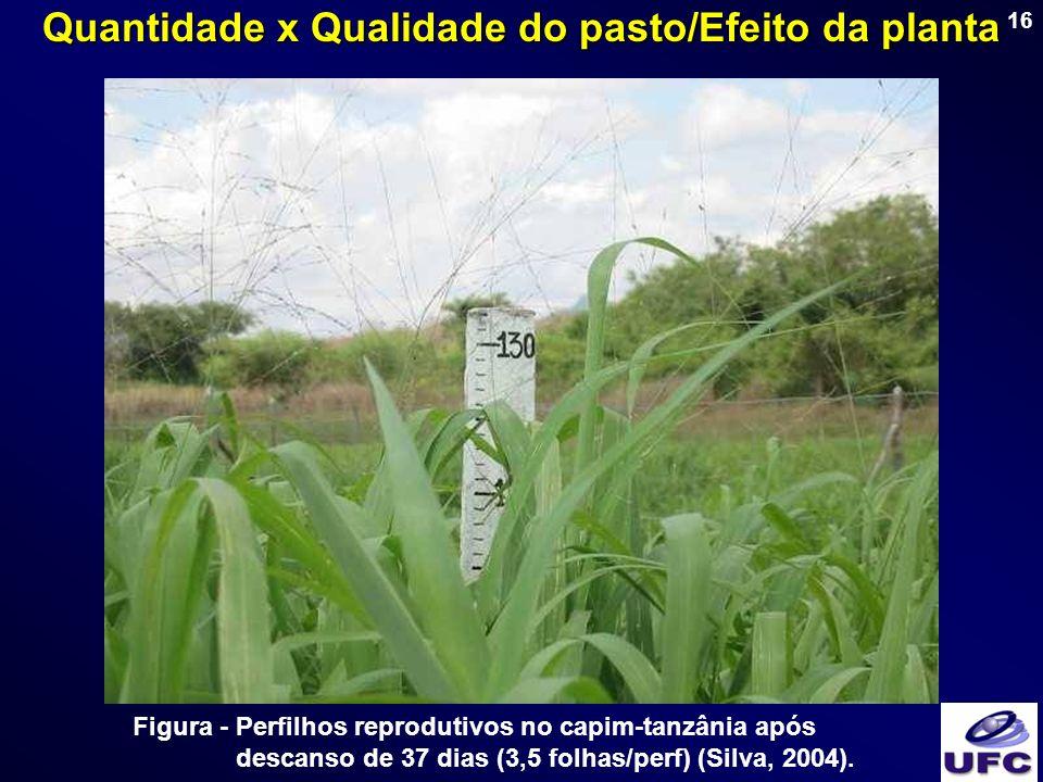 16 Figura - Perfilhos reprodutivos no capim-tanzânia após descanso de 37 dias (3,5 folhas/perf) (Silva, 2004). Quantidade x Qualidade do pasto/Efeito