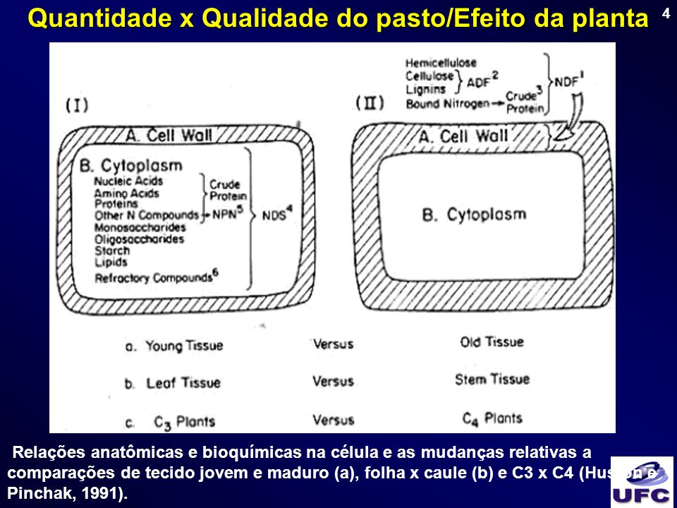 55 Período de descanso (PD) Planta: Cynodon = 20 – 25 dias Panicum = 20 – 35 dias Animal: PD para ovinos < PD para bovinos Dimensionam.