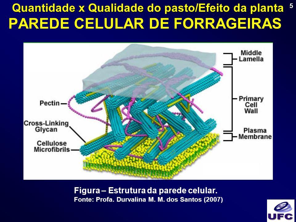5 PAREDE CELULAR DE FORRAGEIRAS Figura – Estrutura da parede celular. Fonte: Profa. Durvalina M. M. dos Santos (2007) Quantidade x Qualidade do pasto/