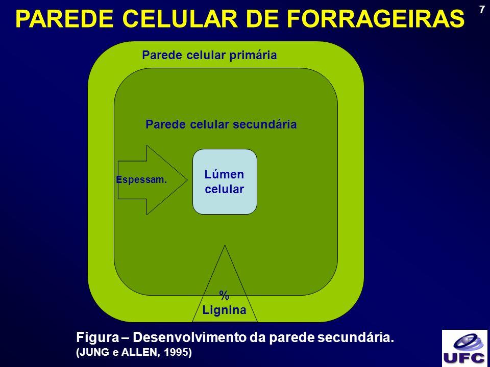7 Lúmen celular Parede celular primária Parede celular secundária % Lignina Espessam. Figura – Desenvolvimento da parede secundária. (JUNG e ALLEN, 19