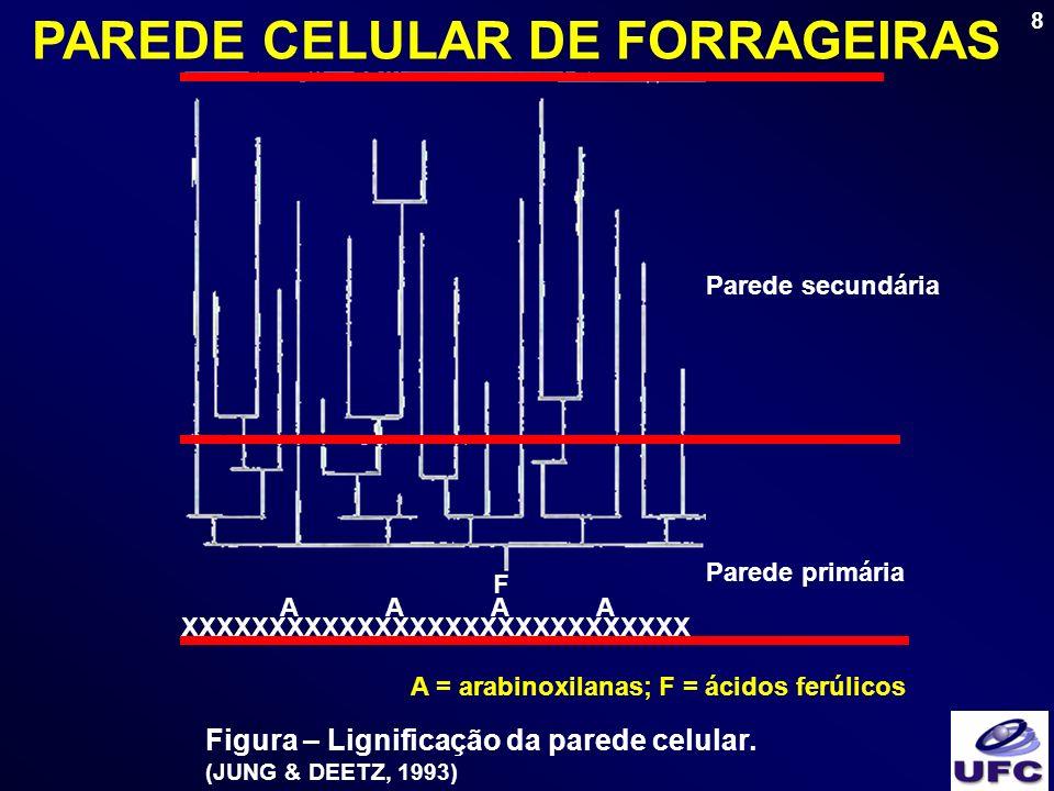 8 Parede primária Parede secundária XXXXXXXXXXXXXXXXXXXXXXXXXXXXX AAAAAAAA F A = arabinoxilanas; F = ácidos ferúlicos Figura – Lignificação da parede