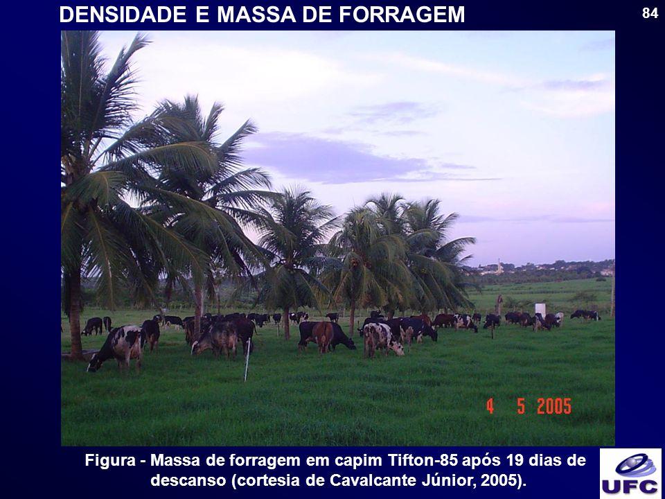 84 DENSIDADE E MASSA DE FORRAGEM Figura - Massa de forragem em capim Tifton-85 após 19 dias de descanso (cortesia de Cavalcante Júnior, 2005).