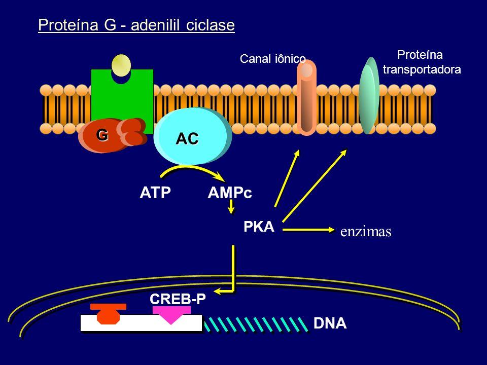 Fatores de transcrição Segundos mensageiros Proteínas quinases enzimas receptores canais iônicos proteínas transportadoras Proteína G efetor