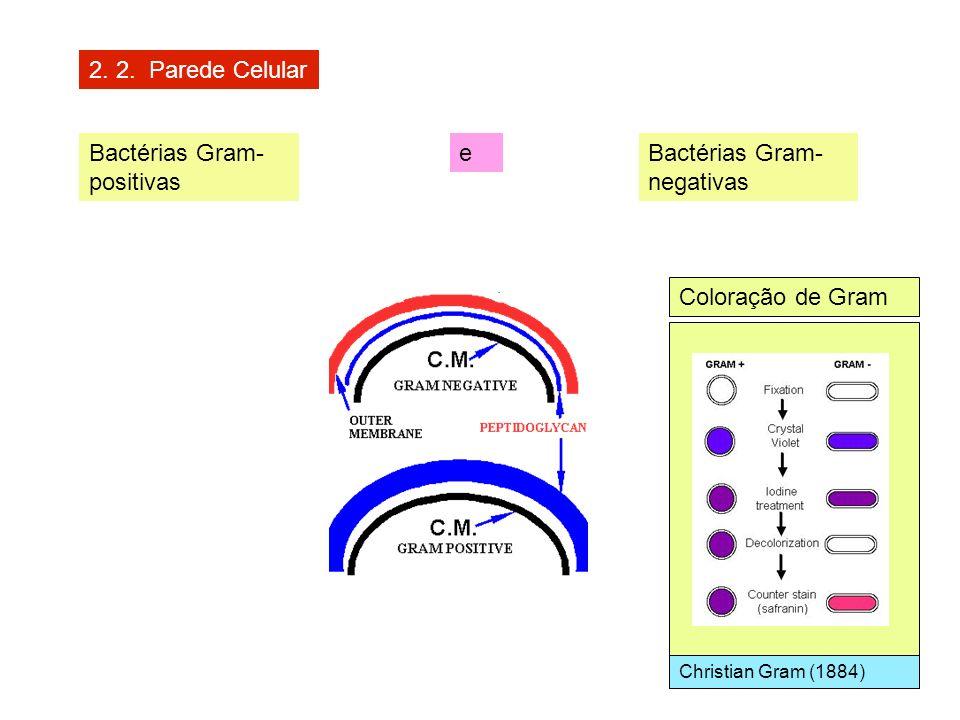 2. 2. Parede Celular Bactérias Gram- positivas Bactérias Gram- negativas e Coloração de Gram Christian Gram (1884)