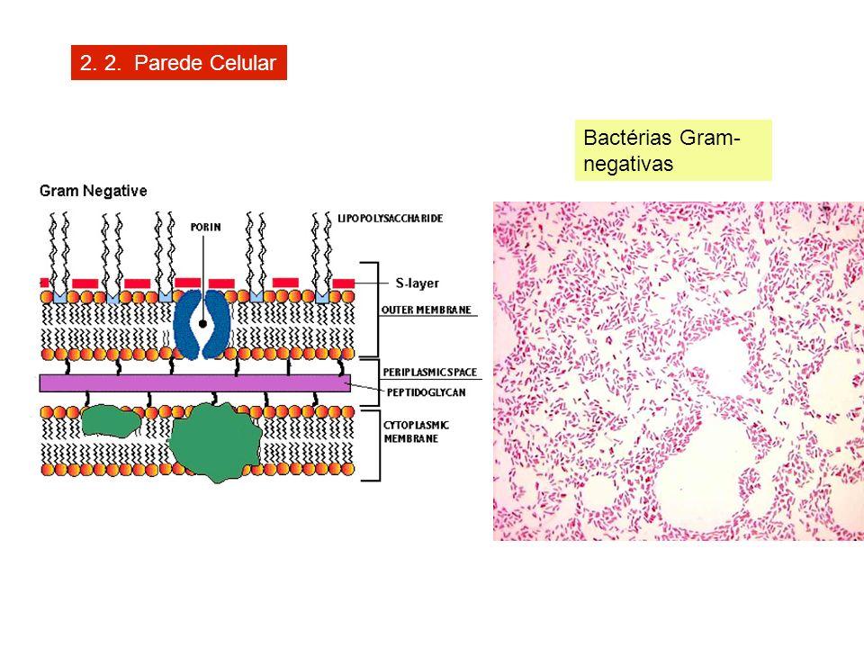 2. 2. Parede Celular Bactérias Gram- negativas