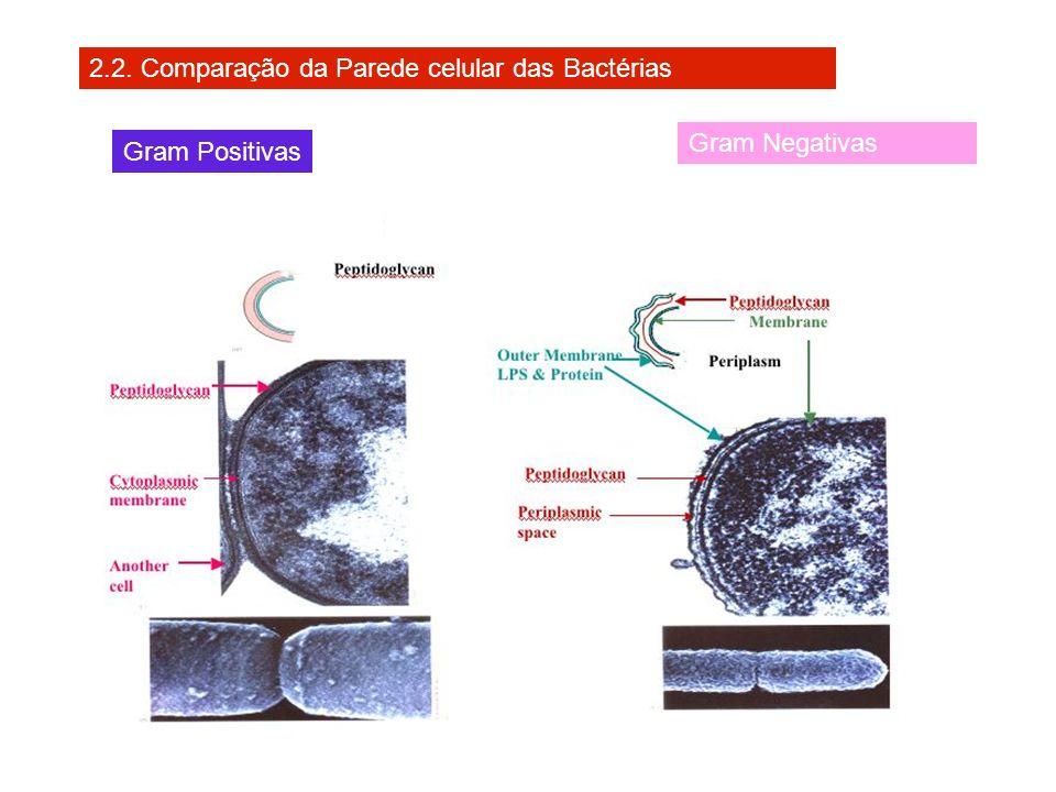 2.2. Comparação da Parede celular das Bactérias Gram Positivas Gram Negativas