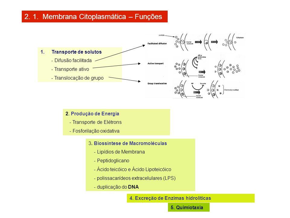 2. 1. Membrana Citoplasmática – Funções 1.Transporte de solutos - Difusão facilitada - Transporte ativo - Translocação de grupo 2. Produção de Energia