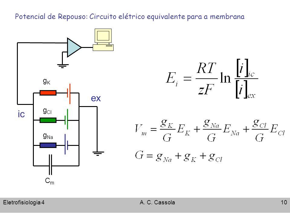 Eletrofisiologia 4A. C. Cassola10 Potencial de Repouso: Circuito elétrico equivalente para a membrana CmCm g Cl gKgK ic ex g Na
