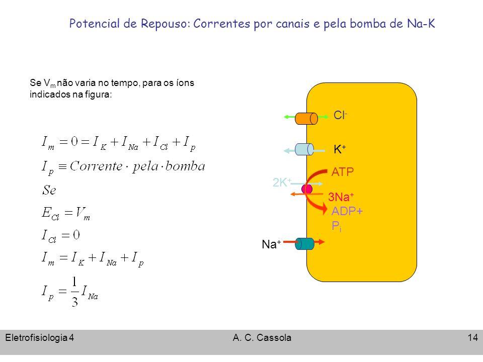Eletrofisiologia 4A. C. Cassola14 Potencial de Repouso: Correntes por canais e pela bomba de Na-K ATP 3Na + 2K + ADP+ P i Cl - K+K+ Na + Se V m não va