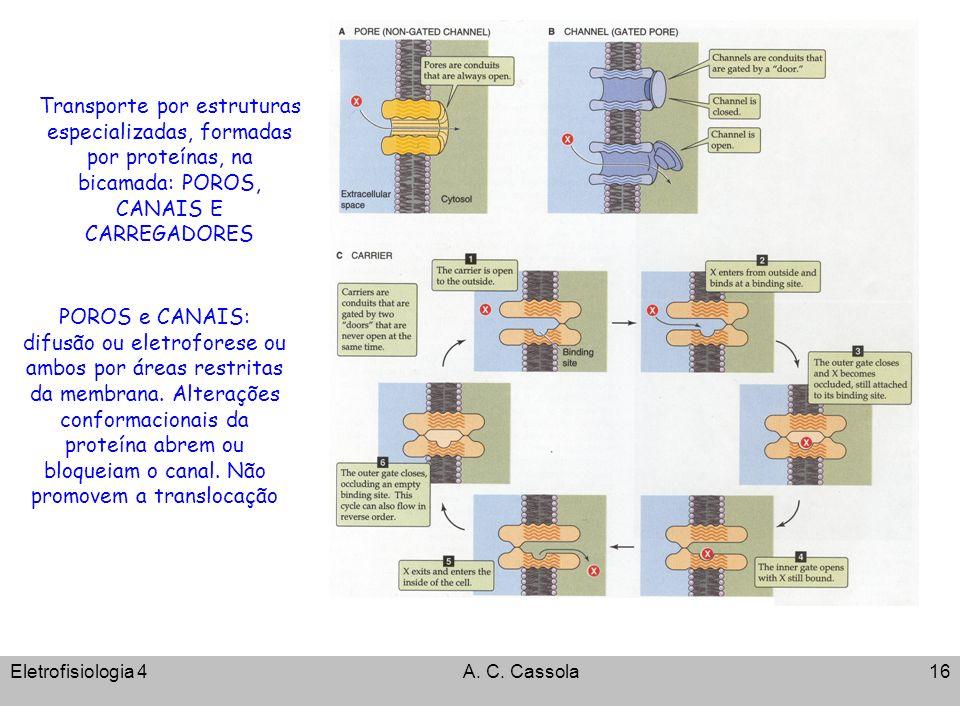 Eletrofisiologia 4A. C. Cassola16 Transporte por estruturas especializadas, formadas por proteínas, na bicamada: POROS, CANAIS E CARREGADORES POROS e