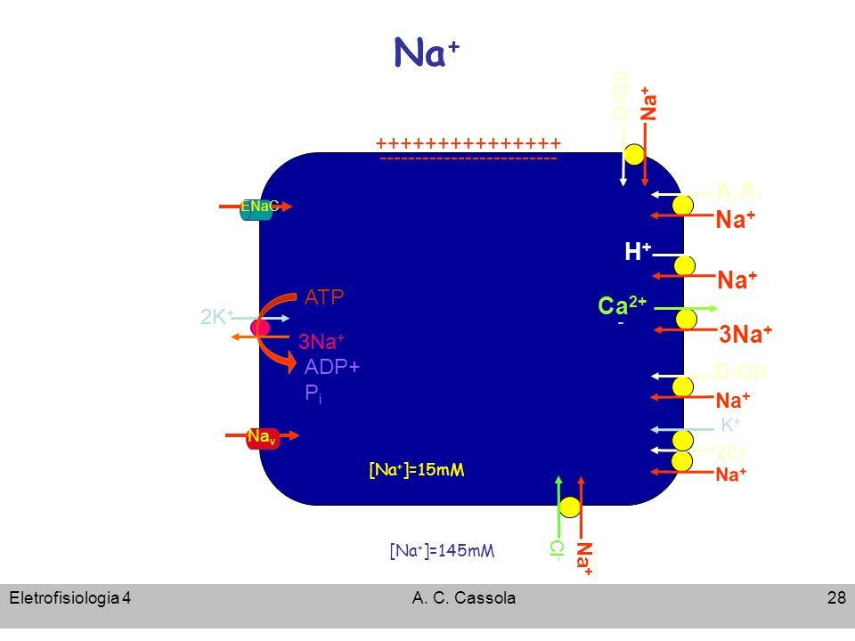 Eletrofisiologia 4A. C. Cassola28 Na + [Na + ]=15mM [Na + ]=145mM ATP 3Na + 2K + ADP+ P i +++++++++++++++ ------------------------- - A.A. Na + H+H+ C