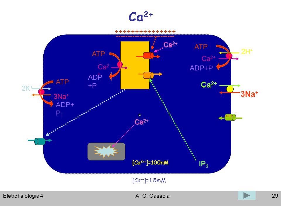 Eletrofisiologia 4A. C. Cassola29 Ca 2+ [Ca 2++ ]=100nM [Ca ++ ]=1.5mM ATP 3Na + 2K + ADP+ P i +++++++++++++++ ------------------------- - Ca 2+ 3Na +