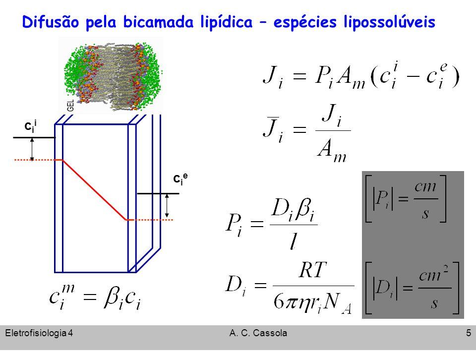Eletrofisiologia 4A. C. Cassola5 Difusão pela bicamada lipídica – espécies lipossolúveis ciecie ciicii