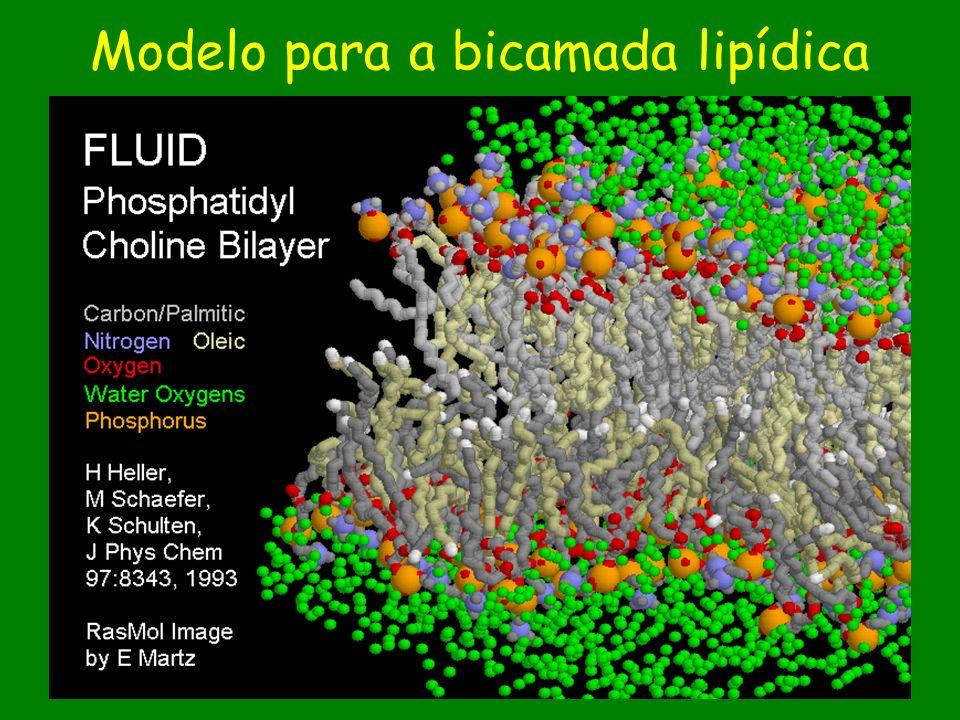 Modelo para a bicamada lipídica