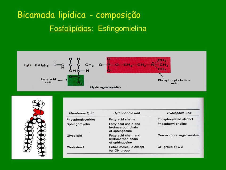 Fosfolipídios: Esfingomielina Bicamada lipídica - composição