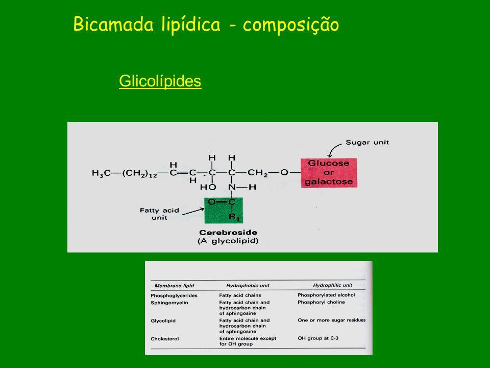 Glicolípides Bicamada lipídica - composição