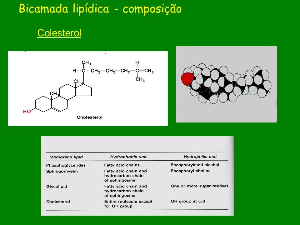 Colesterol Bicamada lipídica - composição