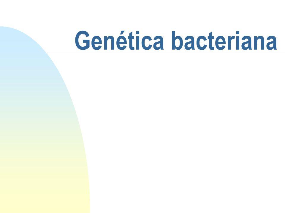 Genótipo e Fenótipo Genótipo - composição genética do organismo: representa as propriedades potenciais do organismo Fenótipo - propriedades reais expressas: manifestação do genótipo