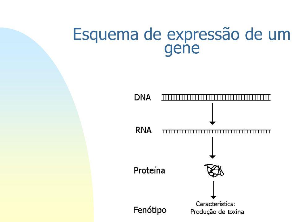 O que é um gene? n Ácidos nucleicos armazenam e transferem informação