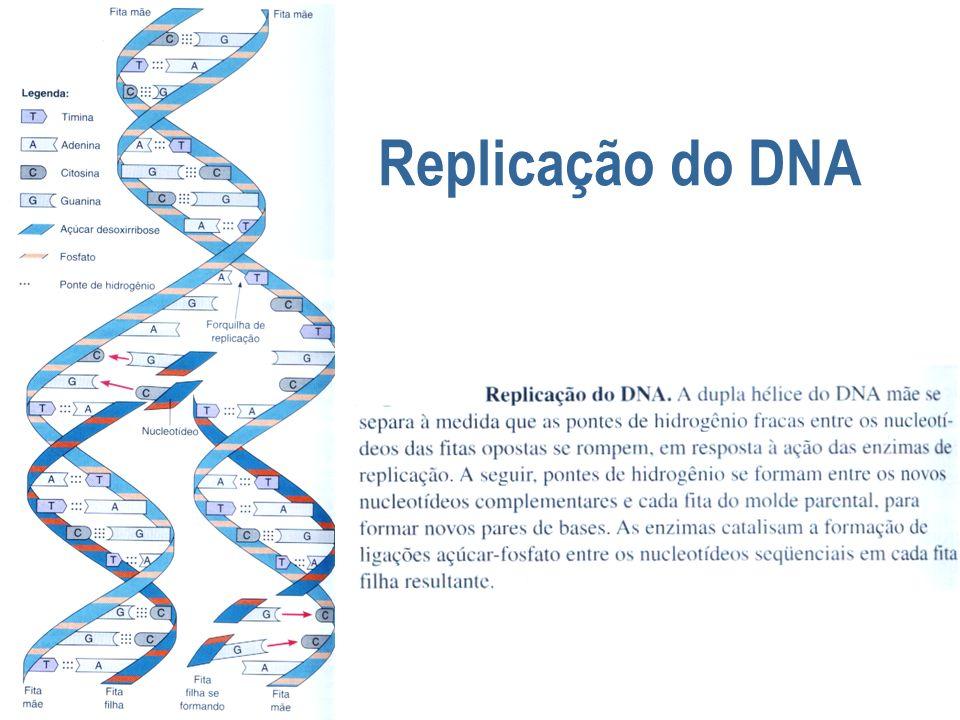 DNA e cromossomos Bactérias - tipicamente possuem um único cromossomo circular - molécula Escherichia coli - DNA com 4 milhões de pares de bases 1 mm