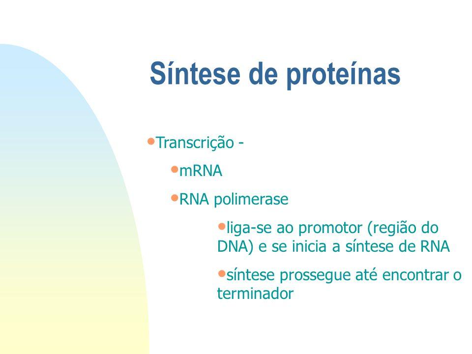 Síntese de proteínas Transcrição - a informação genética do DNA é transcrita numa seqüência de bases no RNA Tradução - a informação contida no RNA é t