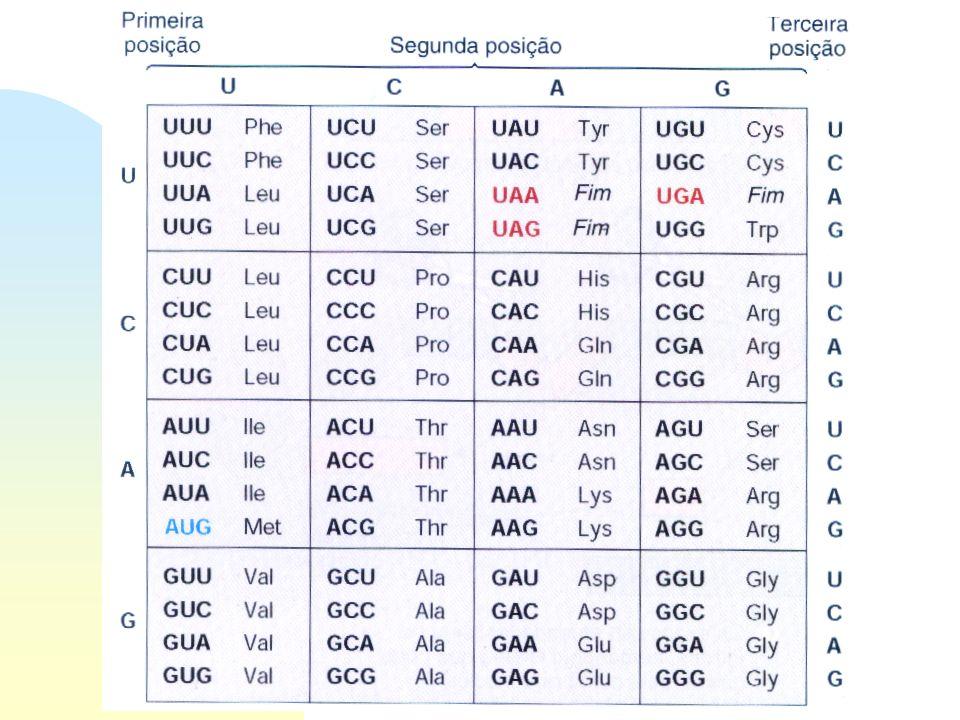 Síntese de proteínas Tradução - Linguagem do mRNA está na forma de códons 3 nucleotídeos AAA, AUG, GGC seqüência de nucleotídeos determina a seqüência