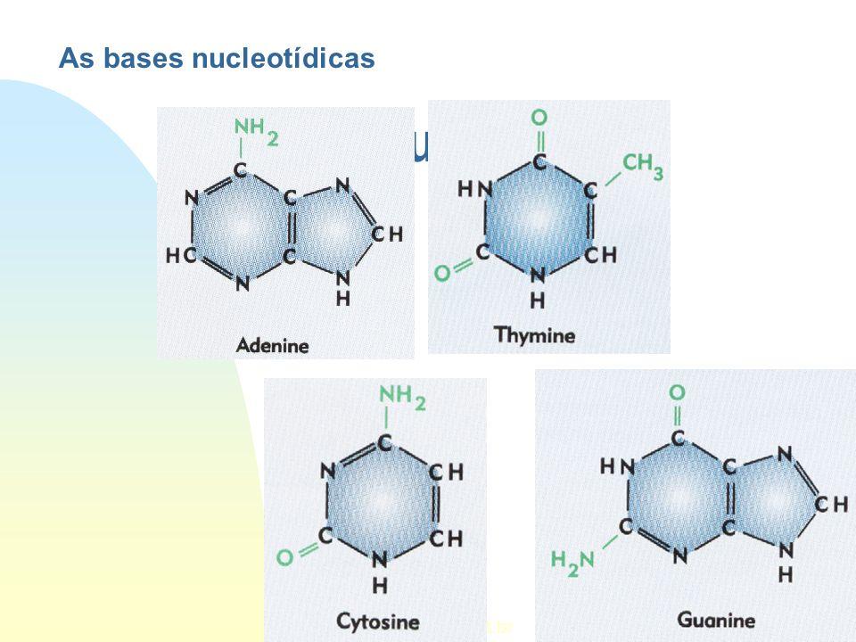 Estrutura do DNA http:// www.ipt.br As bases nucleotídicas