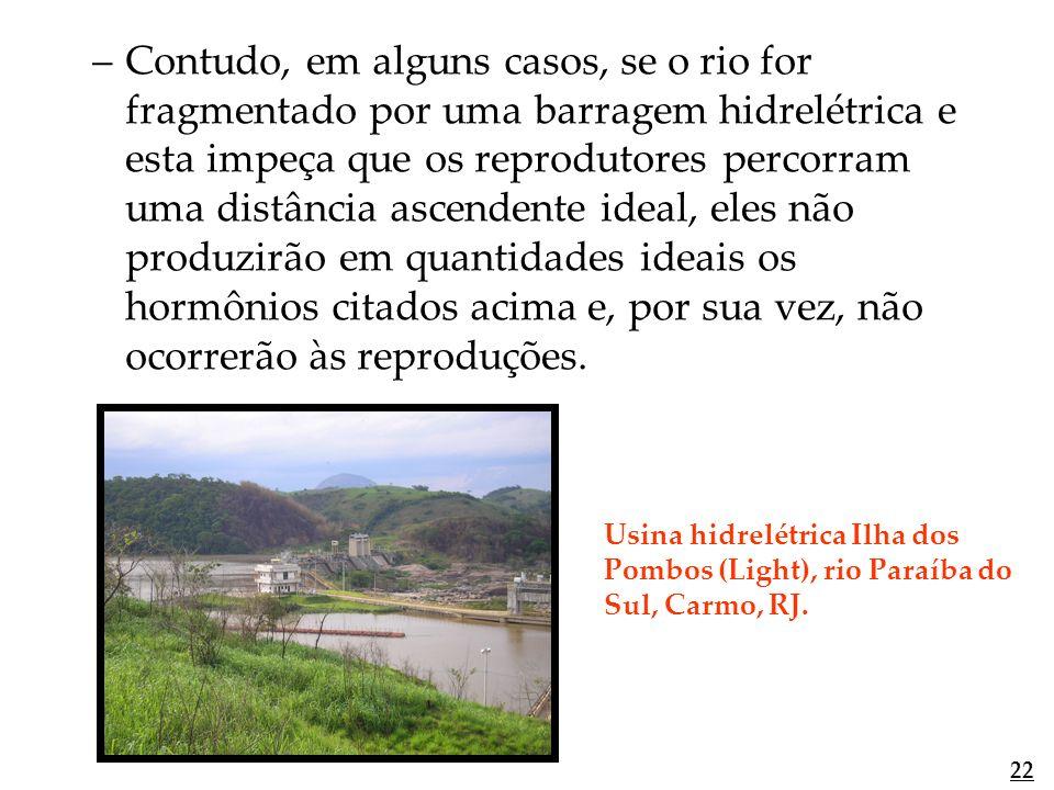 –Contudo, em alguns casos, se o rio for fragmentado por uma barragem hidrelétrica e esta impeça que os reprodutores percorram uma distância ascendente