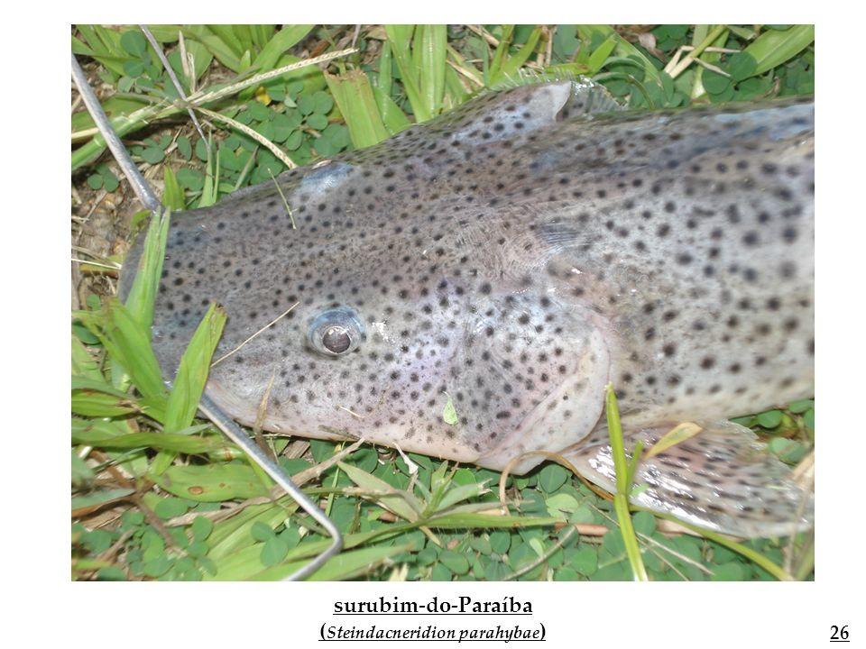 Outras espécies de outros rios brasileiros Fonte: Ecologia e manejo de recursos pesqueiros em reservatórios do Brasil 26 27