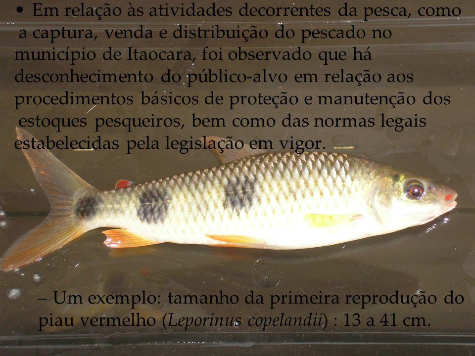 Em relação às atividades decorrentes da pesca, como a captura, venda e distribuição do pescado no município de Itaocara, foi observado que há desconhecimento do público-alvo em relação aos procedimentos básicos de proteção e manutenção dos estoques pesqueiros, bem como das normas legais estabelecidas pela legislação em vigor.
