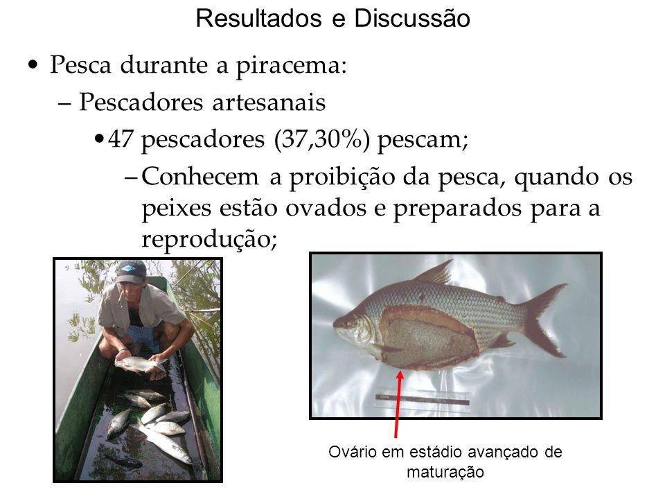 Resultados e Discussão Pesca durante a piracema: –Pescadores artesanais 47 pescadores (37,30%) pescam; –Conhecem a proibição da pesca, quando os peixes estão ovados e preparados para a reprodução; Ovário em estádio avançado de maturação