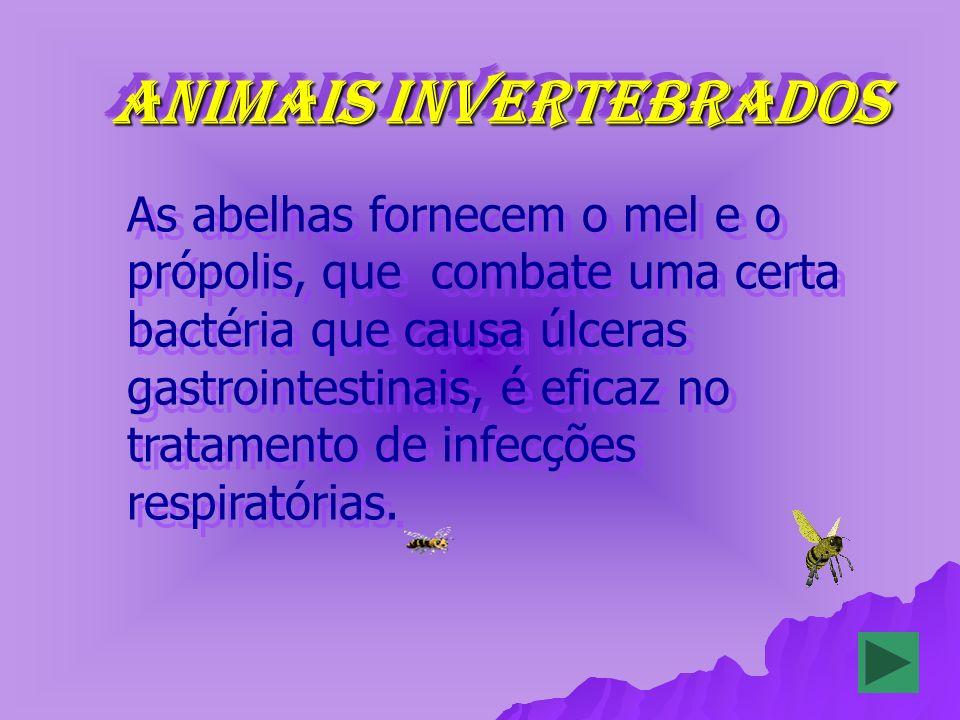 ANIMAIS INVERTEBRADOS ANIMAIS INVERTEBRADOS As abelhas fornecem o mel e o própolis, que combate uma certa bactéria que causa úlceras gastrointestinais, é eficaz no tratamento de infecções respiratórias.