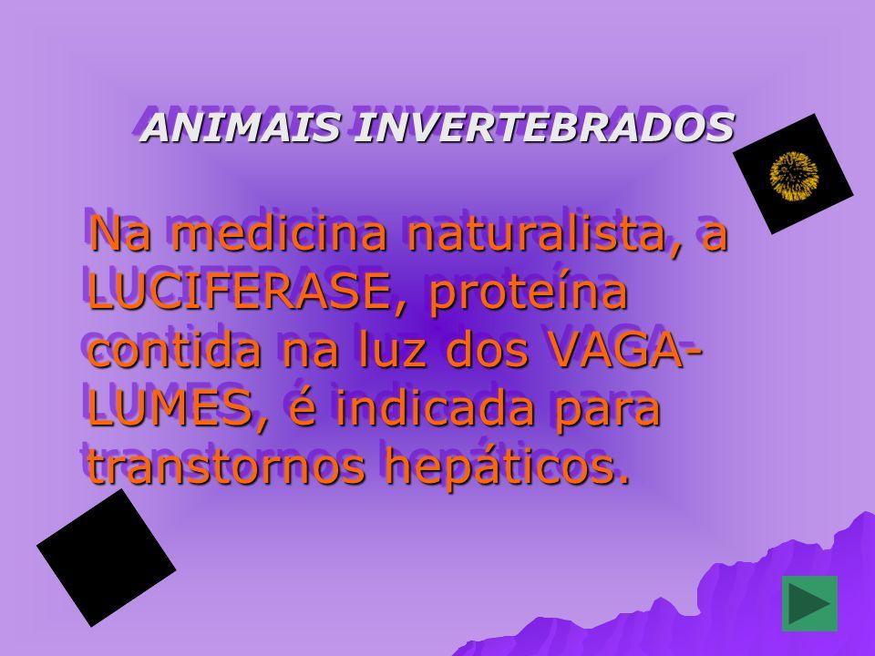 ANIMAIS INVERTEBRADOS Na medicina naturalista, a LUCIFERASE, proteína contida na luz dos VAGA- LUMES, é indicada para transtornos hepáticos.