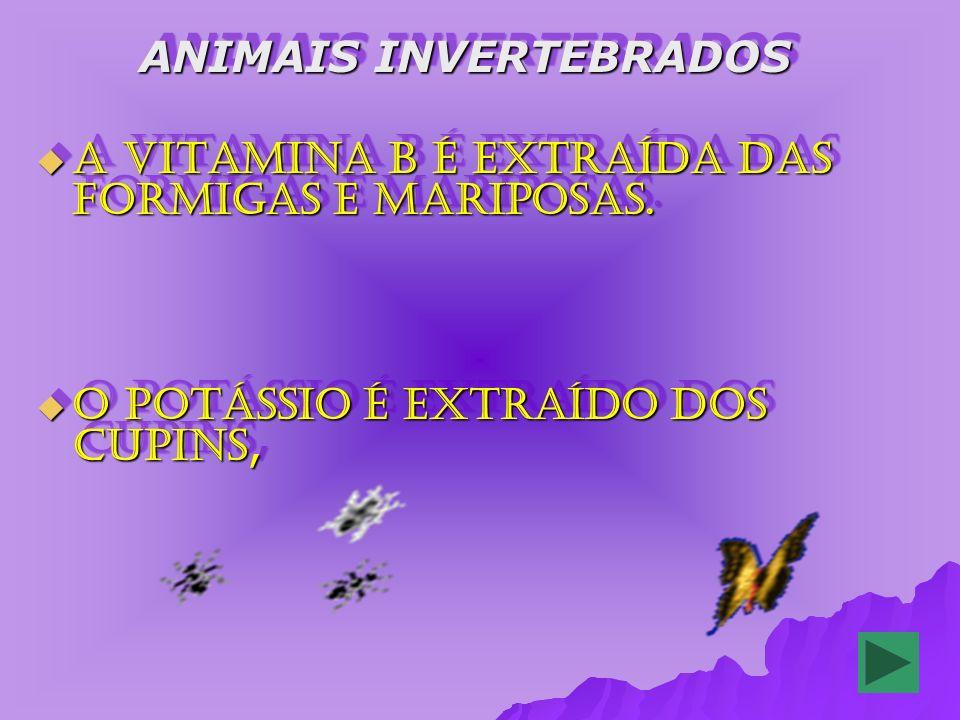 ANIMAIS INVERTEBRADOS ANIMAIS INVERTEBRADOS A vitamina B é extraída das formigas e mariposas.