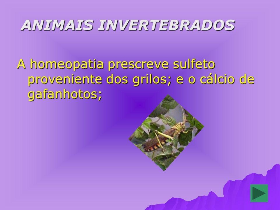 ANIMAIS INVERTEBRADOS ANIMAIS INVERTEBRADOS A homeopatia prescreve sulfeto proveniente dos grilos; e o cálcio de gafanhotos;