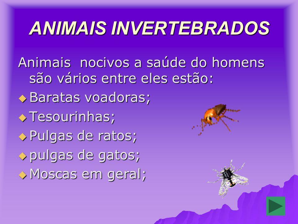 ANIMAIS INVERTEBRADOS Animais nocivos a saúde do homens são vários entre eles estão: Baratas voadoras; Baratas voadoras; Tesourinhas; Tesourinhas; Pulgas de ratos; Pulgas de ratos; pulgas de gatos; pulgas de gatos; Moscas em geral; Moscas em geral;
