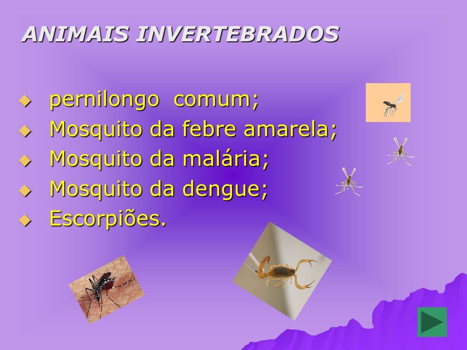 ANIMAIS INVERTEBRADOS ANIMAIS INVERTEBRADOS pernilongo comum; pernilongo comum; Mosquito da febre amarela; Mosquito da febre amarela; Mosquito da malária; Mosquito da malária; Mosquito da dengue; Mosquito da dengue; Escorpiões.