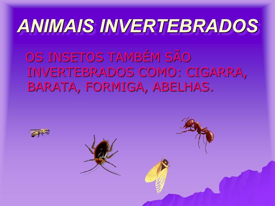 ANIMAIS INVERTEBRADOS OS INSETOS TAMBÉM SÃO INVERTEBRADOS COMO: CIGARRA, BARATA, FORMIGA, ABELHAS.