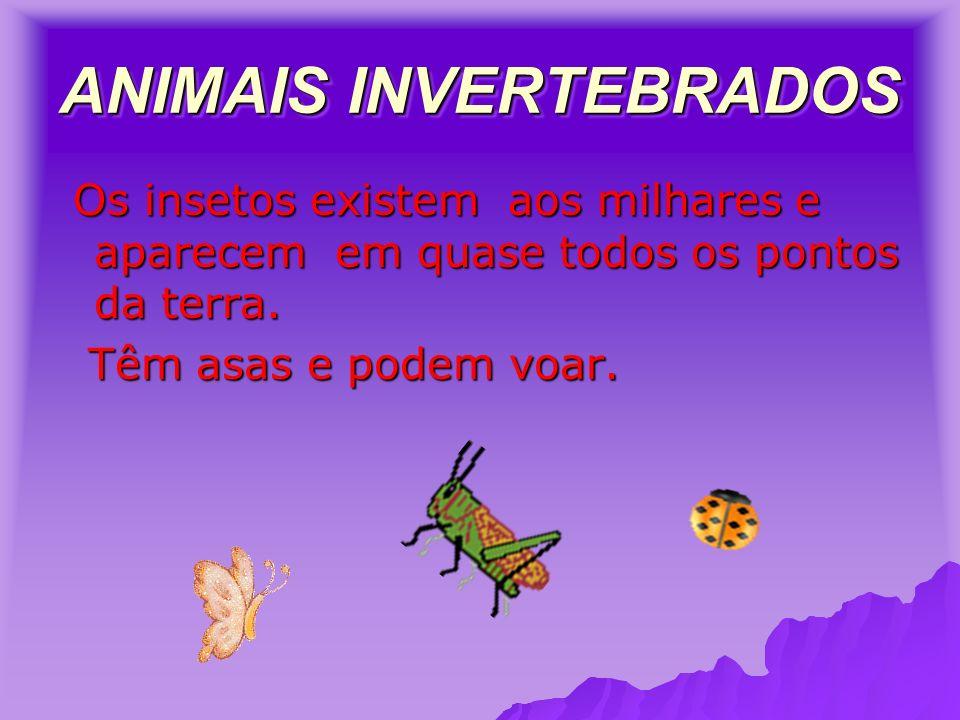 ANIMAIS INVERTEBRADOS Os insetos existem aos milhares e aparecem em quase todos os pontos da terra.