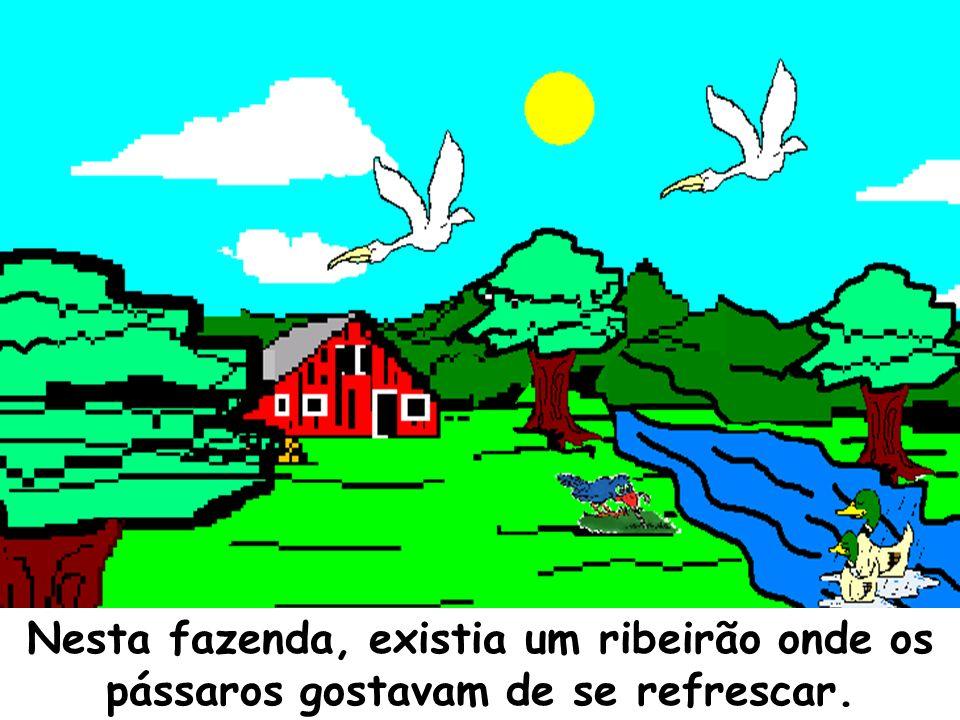 Nesta fazenda, existia um ribeirão onde os pássaros gostavam de se refrescar.
