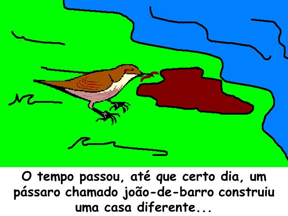 O tempo passou, até que certo dia, um pássaro chamado joão-de-barro construiu uma casa diferente...