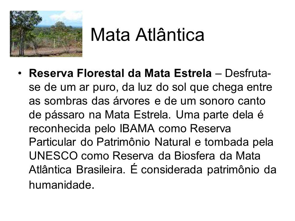 Mata Atlântica Reserva Florestal da Mata Estrela – Desfruta- se de um ar puro, da luz do sol que chega entre as sombras das árvores e de um sonoro canto de pássaro na Mata Estrela.