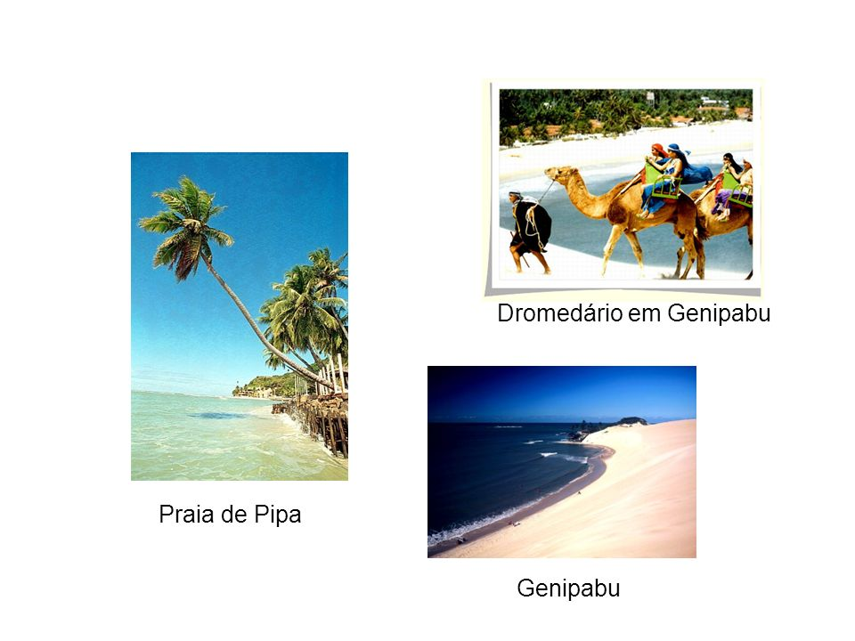 Genipabu Praia de Pipa Dromedário em Genipabu